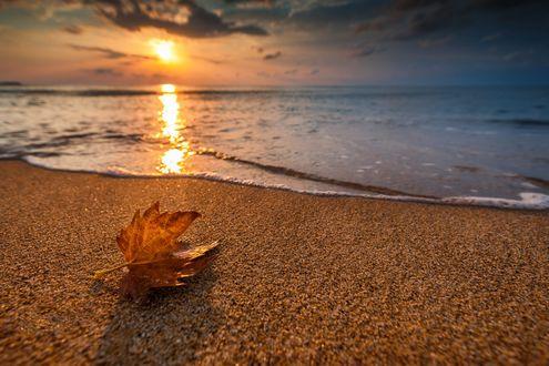 Обои Осенний кленовый листок лежит на берегу моря, фотограф Valentin Valkov