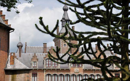 Обои Сквозь ветки дерева виден замок на фоне неба