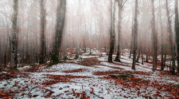 Обои Осенний лес с опавшими листьями и первым снегом поздней осенью