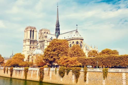Обои Собор Парижской богоматери в Париже, Франция среди деревьев осенью, освещенный солнцем