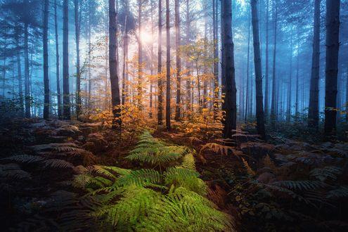 Обои Солнечный свет освещает лес, фотограф Adnan Bubalo