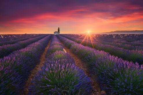 Обои Красивые поля лаванды летом, Valensole, Provence, France / Прованс, Франция, фотограф Albert Dros