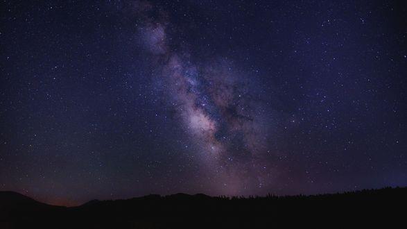 Обои Млечный путь над лесом