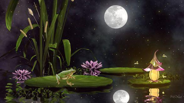Обои Лягушка в лунную ночь на озере с цветущими лилиями