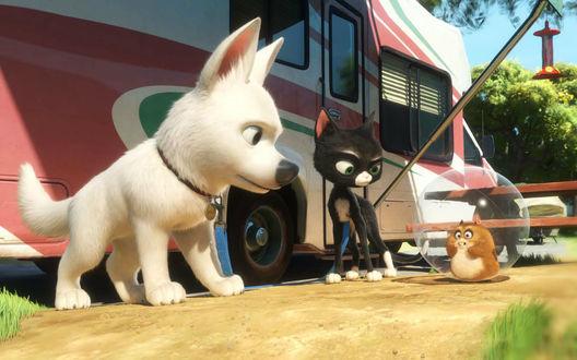 Обои Собака породы Белая швейцарская овчарка - главный персонаж американского полнометражного анимационного фильма 2008 года и бродячая кошка Варежка, а так же хомяк Рино, мультфильм Вольт производства студии Walt Disney / Уолт Диснея