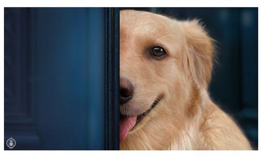 Обои Пес выглядывает из-за двери, фотограф Dieter Wolff