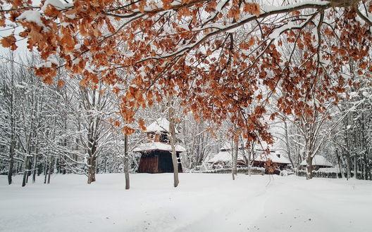 Обои Деревянная церковь в парке под снегом зимой среди деревьев. Снег на желтых осенних листьях на дереве, фотограф Tom