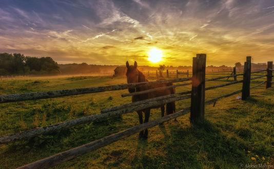 Обои Лошадь у ограды на фоне заката, фотограф Aleksei Malygin