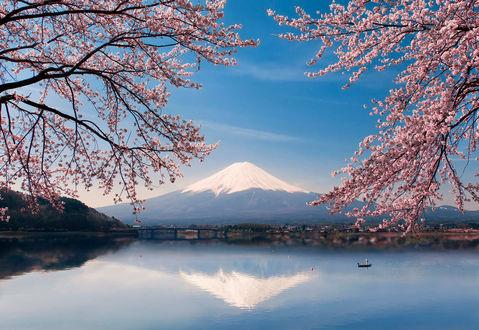 Обои Вид на гору Fujiyama, Honshu Island, Japan / Фудзияма, остров Хонсю, Япония сквозь цветущие ветви сакуры