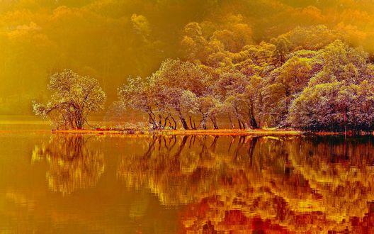 Обои Осенние желтые деревья под желтым небом и отражаются в водоеме