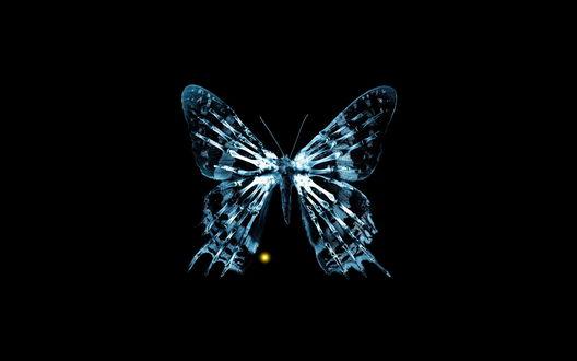Обои У бабочки на рентгене просвечивается скелет