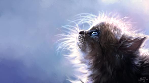Обои Серый и голубоглазый котенок смотрит вверх, by Mitchel93