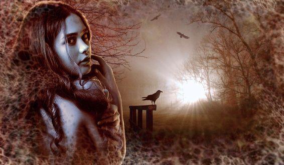 Обои Девушка стоит на фоне ночного леса с воронами