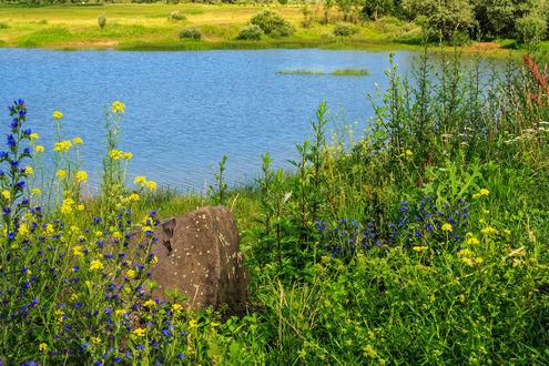 Обои Камень в цветах на берегу у озера, фотограф Mike Pellinni