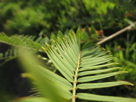 Обои Зеленые листья на дереве