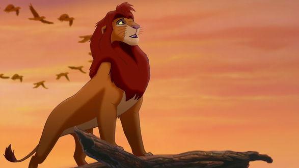 Обои Simba / Симба из мультфильма The lion king / Король лев