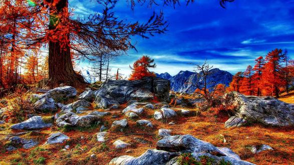 Обои Камни на краю леса, поросшие желтой осенней травой, осенние деревья и горы под синим небом