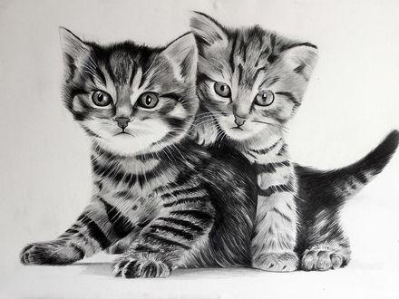 Обои Два нарисованных милых котенка, автор Edman