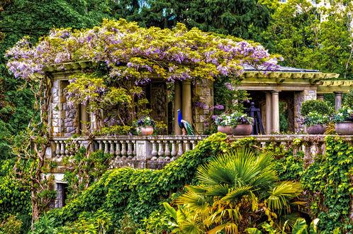 Обои Беседка в красивом парке среди деревьев и цветов с павлином на перилах, национальный парк Хэтли / Hatley Park National Historic Site, Канада / Canada