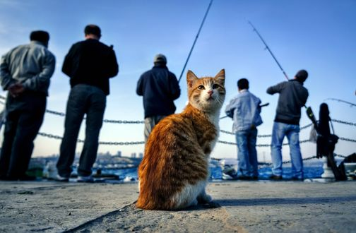 Обои Полосатый рыжий кот сидит рядом с рыбаками и ждет улова