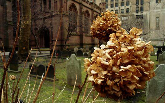 Обои Желтое растение на кладбище возле готической церкви осенью