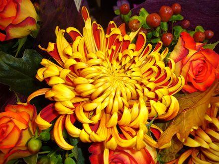 Обои Осенний желто-оранжевый букет из роз, астр и ягод