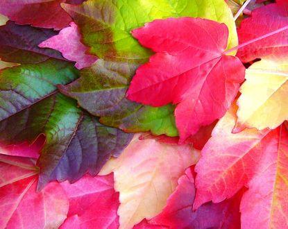 Обои Разноцветные осенние листья