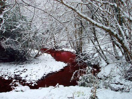 Обои Кровавая речка в лесу зимой среди деревьев в снегу