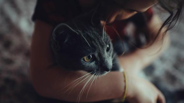 Обои Кошка на руках девушки