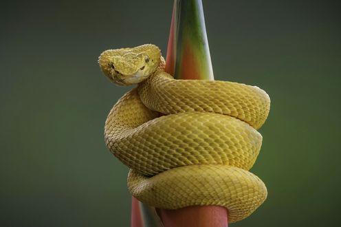 Обои Змея обвилась вокруг стебля