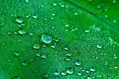 Обои Зеленый лист с каплями росы