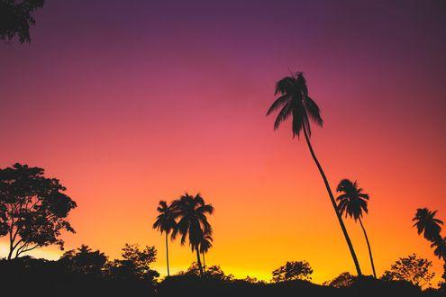 Обои Пальмы на фоне неба