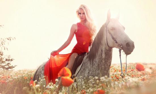 Обои Девушка в красном платье на лошади в поле маков, фотограф Павел Сираковский