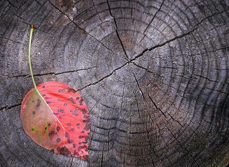 Обои Осенний лист на пне