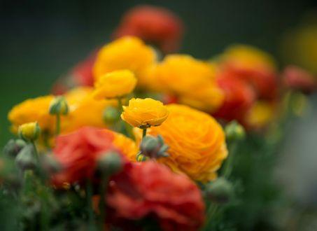 Обои Ораньжево-желтые размытые цветы