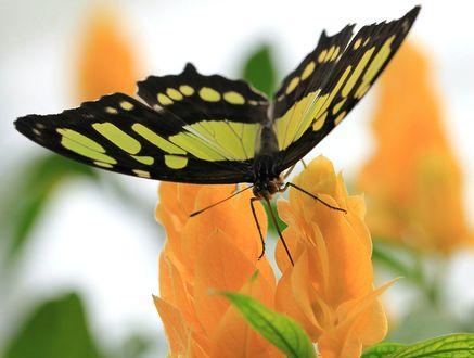 Обои Желто-черная бабочка на цветке