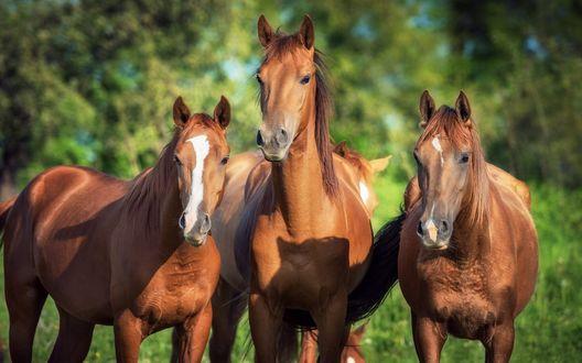 Обои Лошади на фоне природы
