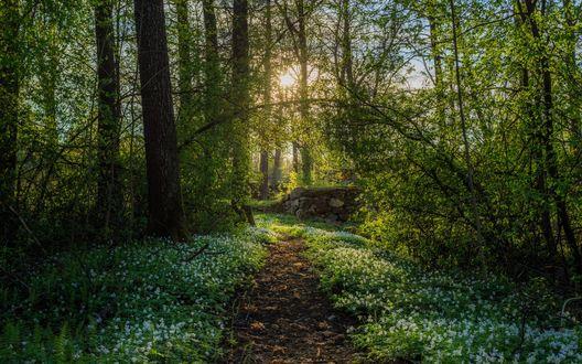 Обои Парк в городе Арвика, Швеция