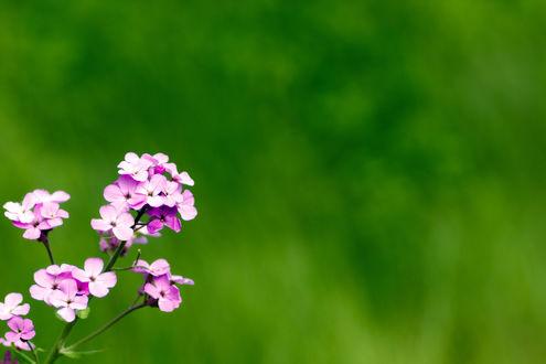 Обои Сиреневый цветок на размытом фоне