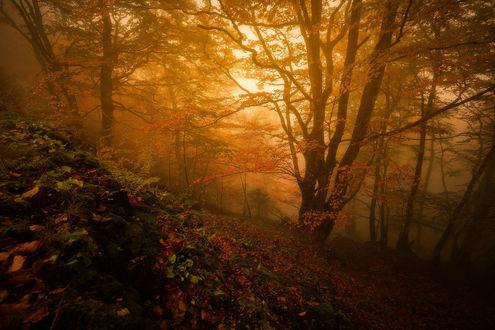 Обои Осенний лес в утренней дымке, фотограф Julien Delaval