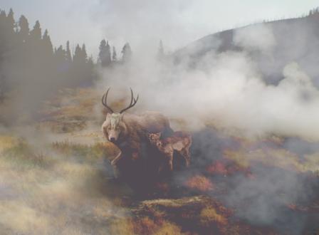 Обои Волк с рогатым черепом на морде и олененок в клубах тумана, by vocalsong