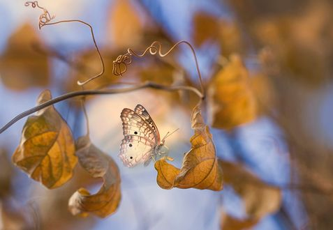 Обои Бабочка сидит на осеннем листе