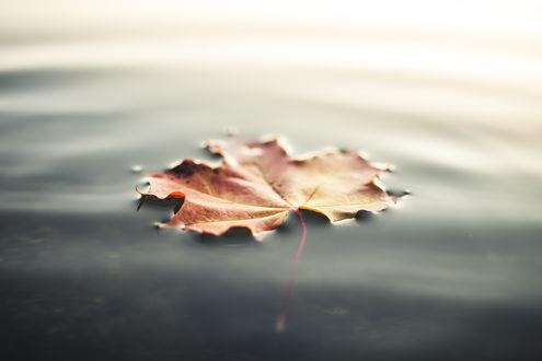 Обои Осенний лист в воде