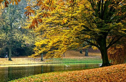 Обои Осенний парк с прудом, фотограф Daniel Bosma