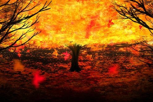 Обои Осеннее дерево, объятое пламенем, by Y_Y