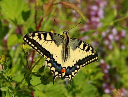 Обои Бабочка крупным планом на растении