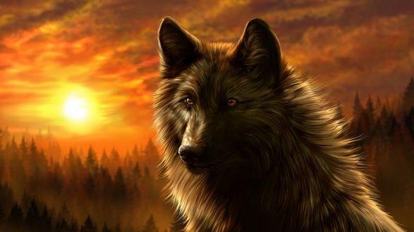Обои Волк на фоне заката, by WolfRoad