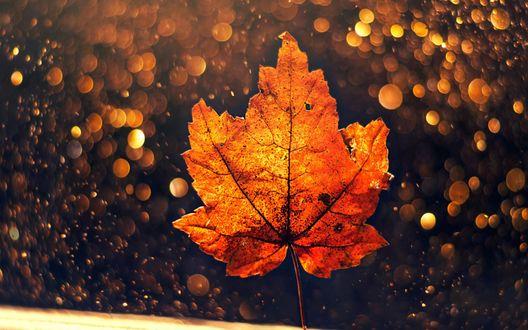 Обои Осенний лист на фоне бликов