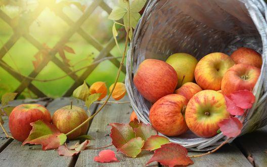 Обои Перевернутая корзина с яблоками на деревянной поверхности и рядом веточка физалиса