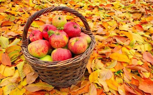 Обои Корзина с яблоками стоит на осенних листьях